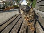 猫のコチャチャ