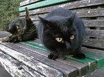 猫のギャオグロ