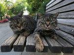 キジキジ(左)とコチャチャ