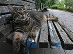 猫のキジキジ